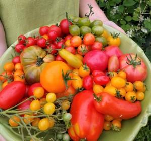 tomatfat 16