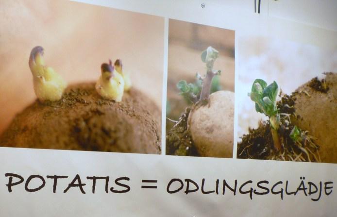 potatis-lätt och gott