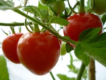GardenBerry hjärtformad tomat