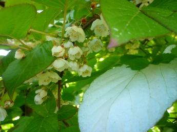 oskar blom