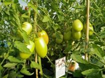 olivade plantor