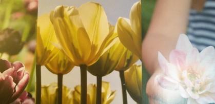Blommande vår