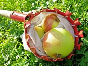 Äppelplockare