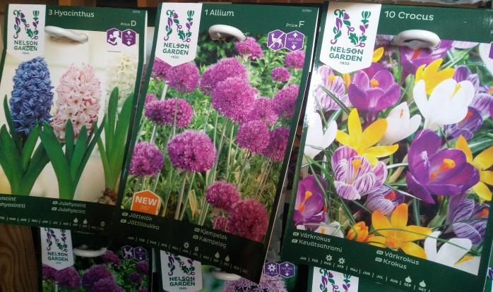 hyacint, jättelök, krokus