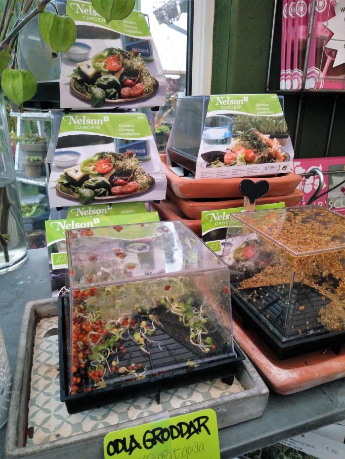 odla vitaminer i groddboxar