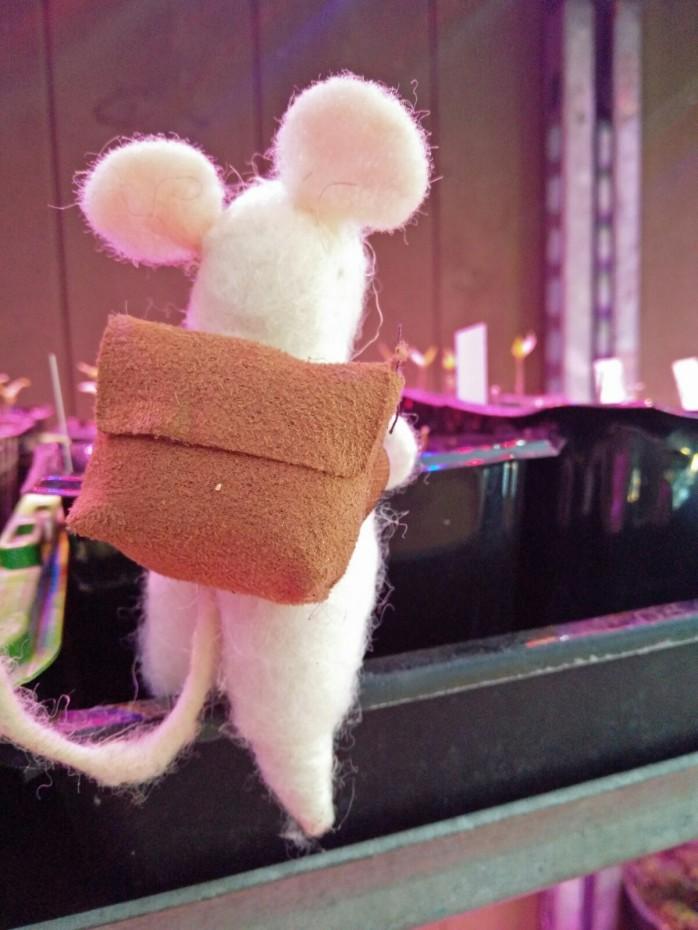 mus ska bort