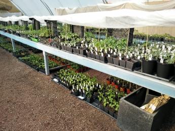 växthus, plantor högt o lågt