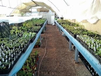 växthus plantor