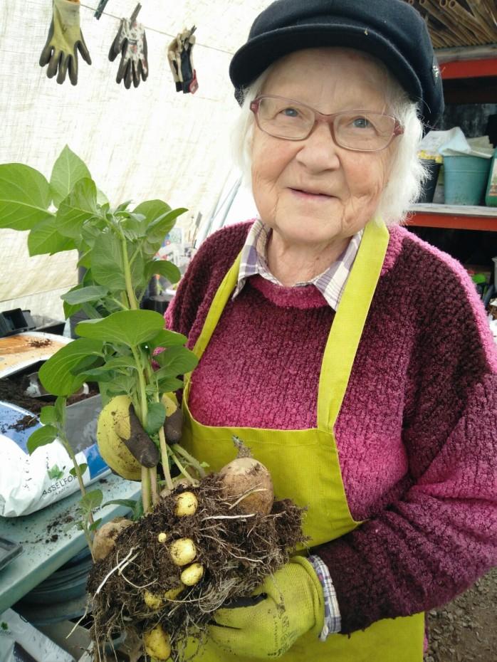 3 maj, Farmor skördar färskpotatis