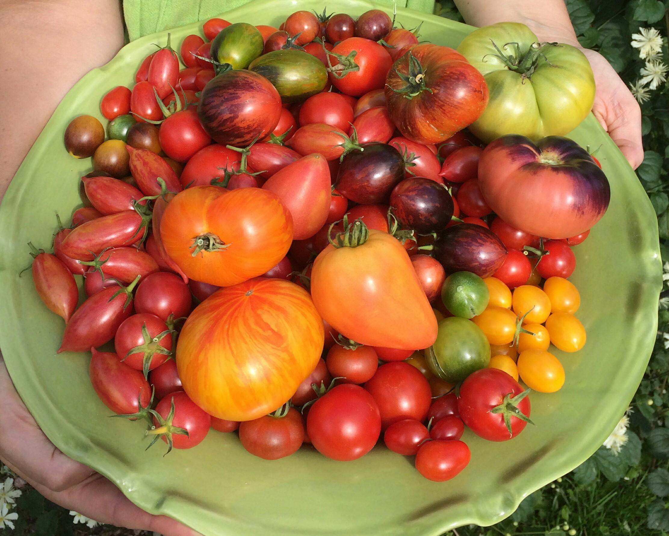 tomatfat 19